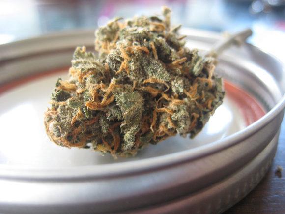 大麻 ムツゴロウ