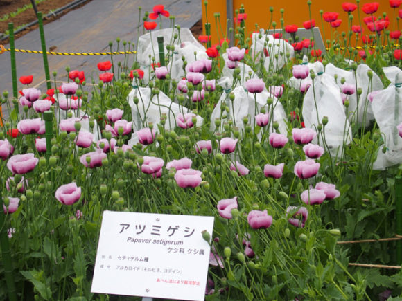 syokubutuen_9